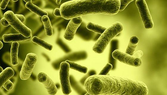 x7 tips gezonde darmflora.jpg.pagespeed.ic_.FZB45an_IQ